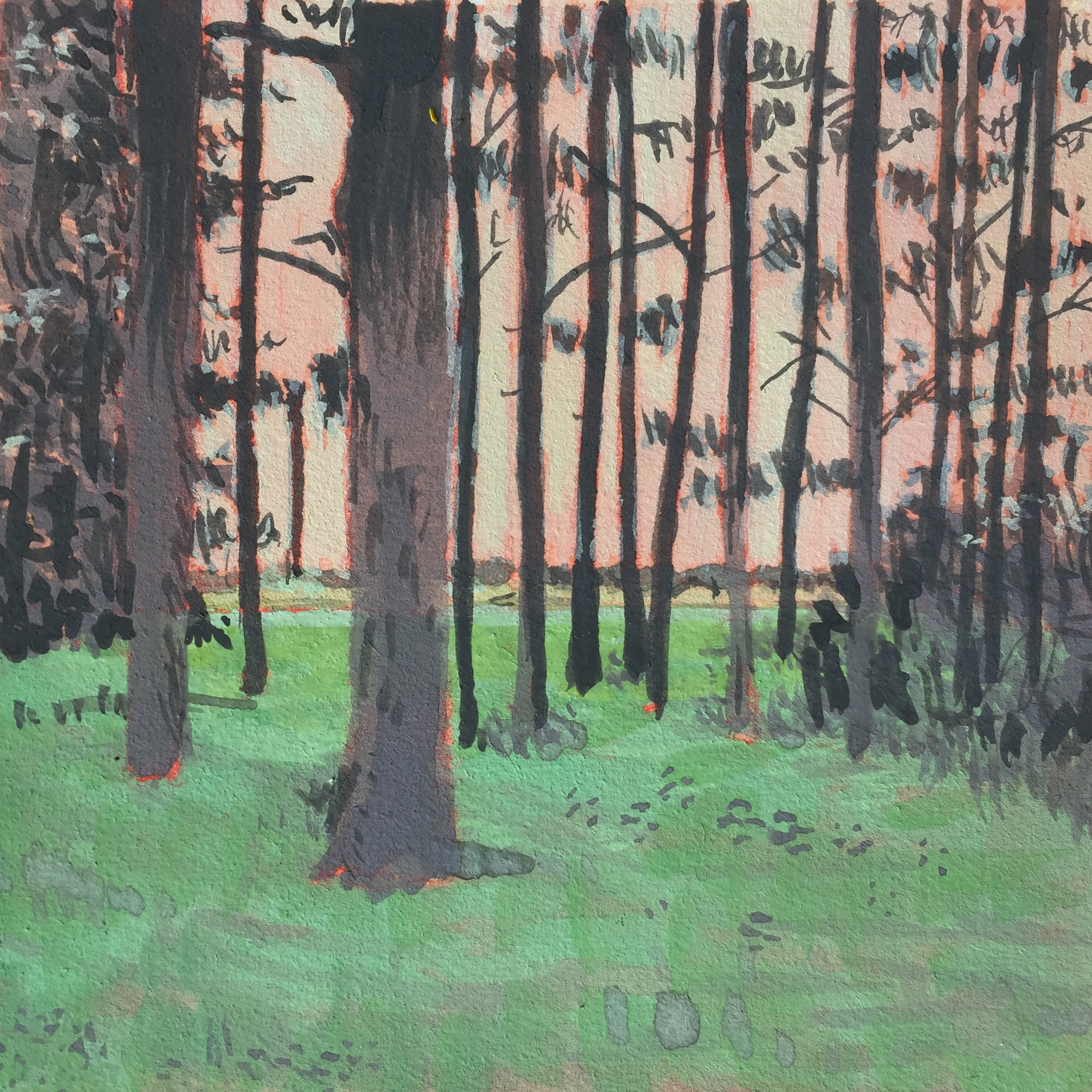 A gouache painting of pine trees at dusk. The sky is sort of pinky-orange-white behind the trees.