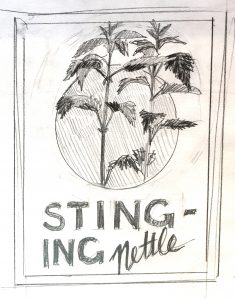 A pencil sketch of two stems of stinging nettle growing up through a circle. The words STING - ING Nettle are below.
